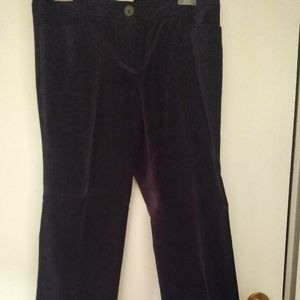 Loft purple velvet pants